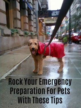 Emergency Preparation For Pets