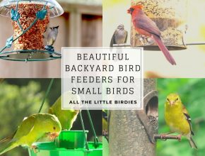 Backyard Bird Feeders For Small Birds